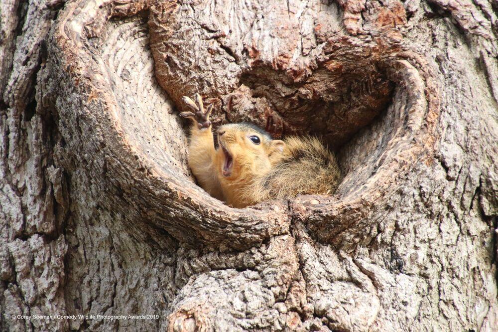 La foto Who would like a peanut? del fotografo americano Corey Seeman, Comedy Wildlife Photography Awards 2019