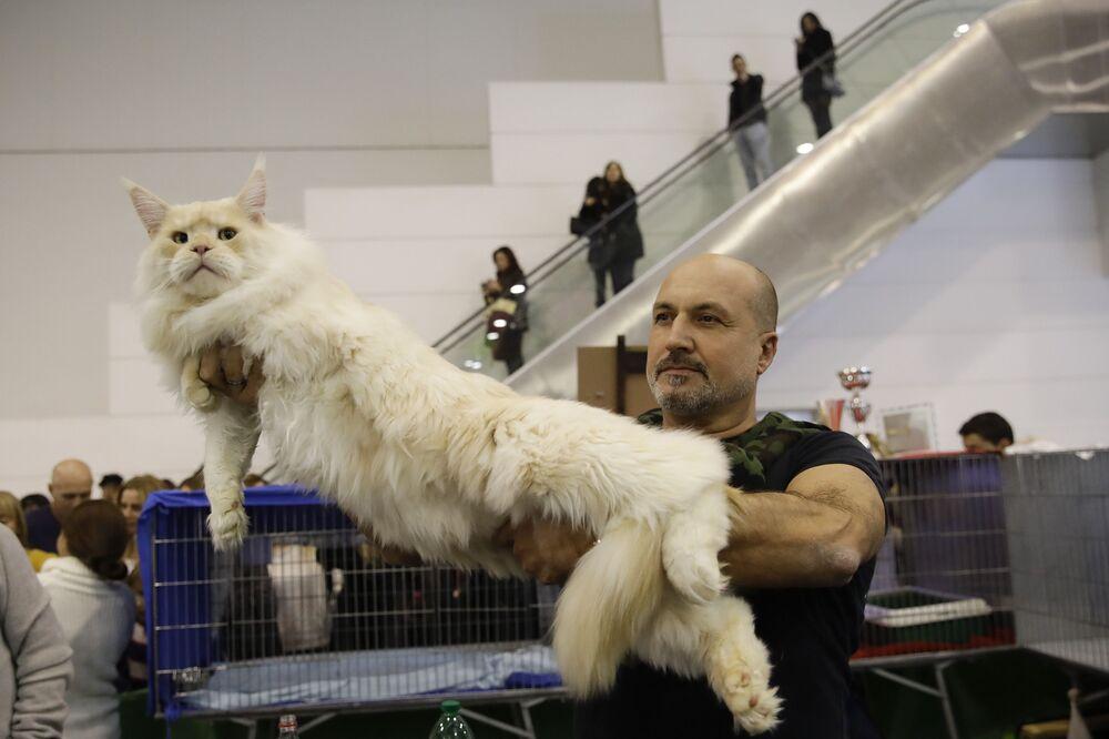 Leonida, un gatto Maine Coon, con il suo proprietario Marco Fabio alla fiera dei gatti SuperCat Show 2019 a Roma, il 16 novembre 2019