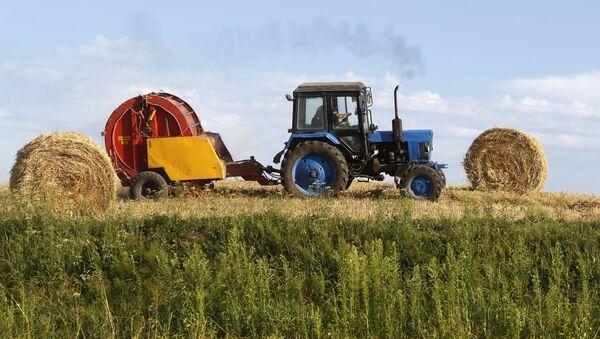 Coltivazione di grano - Sputnik Italia