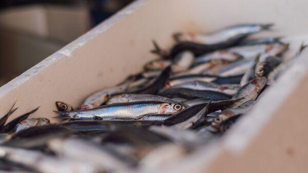 Sardine al mercato del pesce - Sputnik Italia