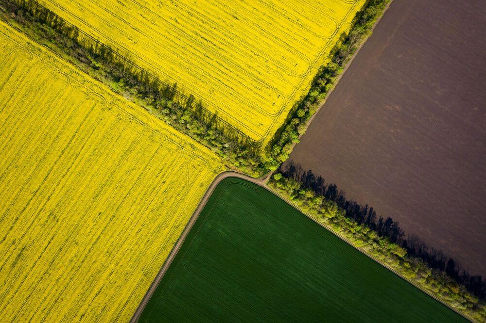 Campi di colza nel territorio di Krasnodar, Russia