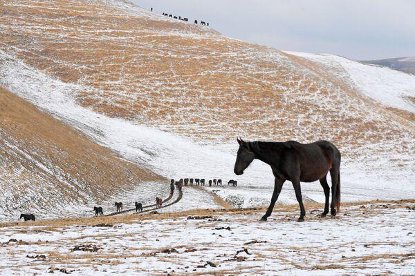 Cavalli nel villaggio di Krasny Kurgan in Russia. - Sputnik Italia