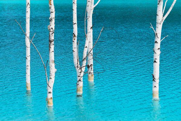 Il lago artificiale vicino alla centrale elettrica di Novosibirsk in Russia - Sputnik Italia
