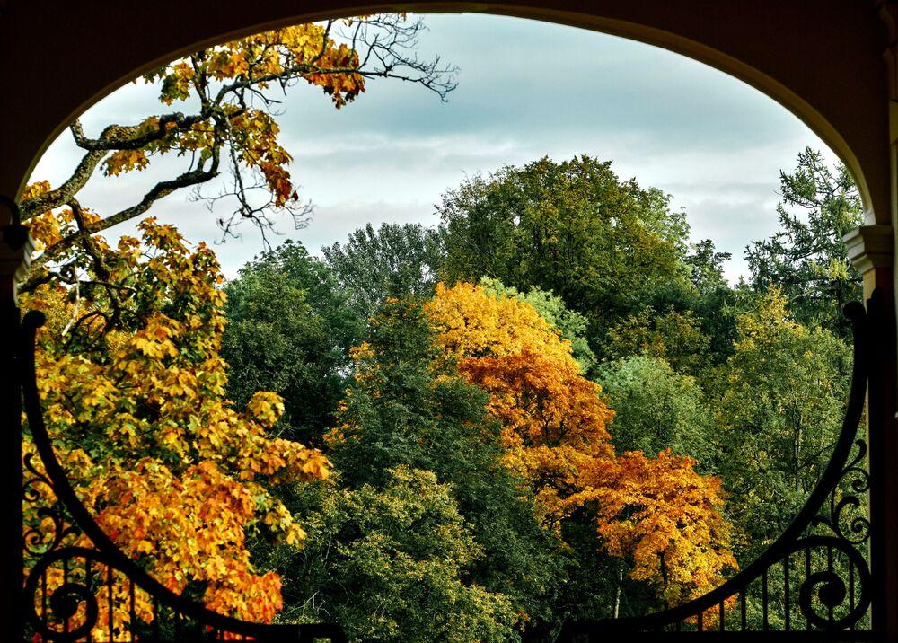 L'autunno nel parco Oranienbaum nella regione di Leningrado.
