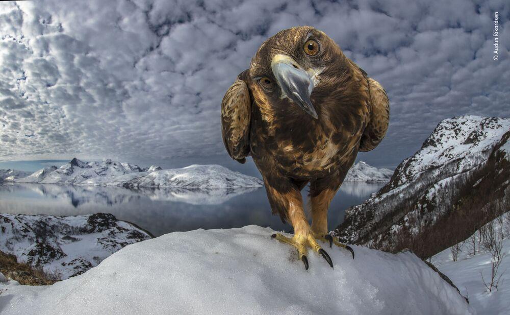 La foto del fotografo norvegese Audun Rikardsen