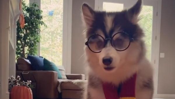 Harry Potter canino - Sputnik Italia