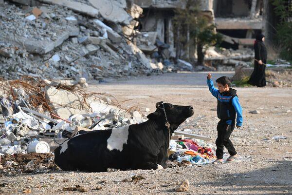 Un ragazzo gioca con una mucca nel cortile della sua casa in un sobborgo nord-orientale di Damasco di Harasta - Sputnik Italia