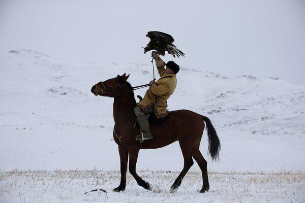Un cacciatore con un'aquila su un cavallo durante una battuta di caccia in Kazakistan - Sputnik Italia