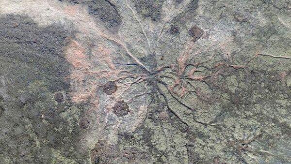 Ramificazione pietrificata degli alberi più antichi del pianeta - Sputnik Italia