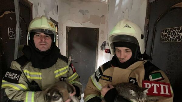 170 animali salvati a Grozny, Russia - Sputnik Italia