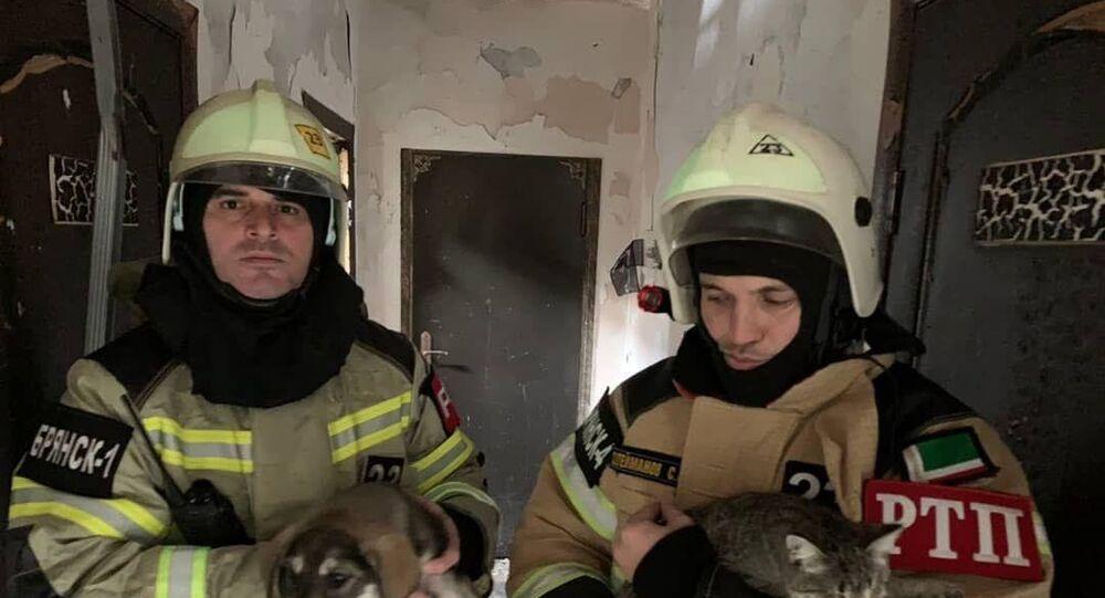 170 animali salvati a Grozny, Russia