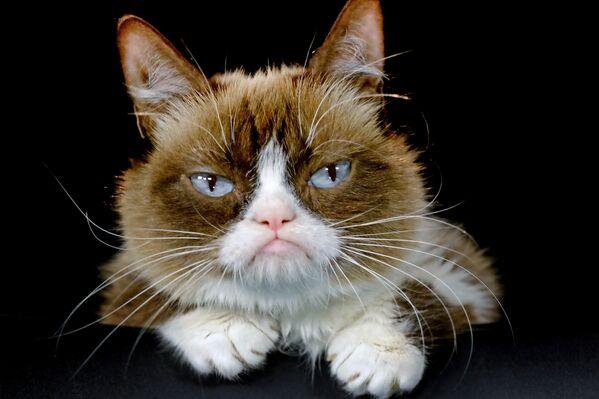 Tardar Sauce, conosciuta su Internet con il soprannome Grumpy Cat, era una gatta nota per la sua particolare espressione facciale, divenuta grazie a questa un fenomeno di Internet. Grumpy Cat si è spenta il 14 maggio 2019 - Sputnik Italia