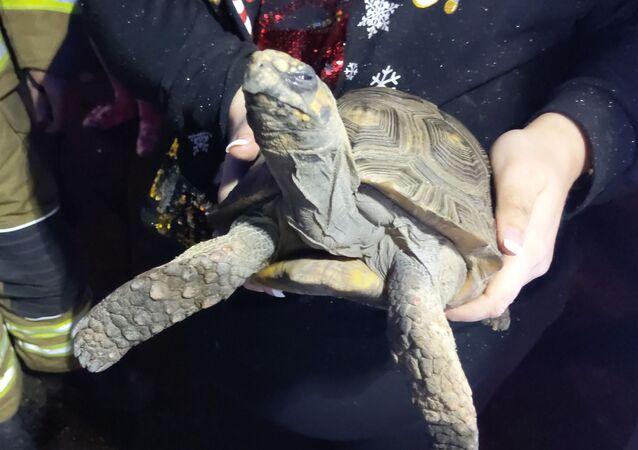 Tartaruga salvata da incendio
