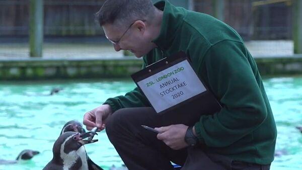 Inventario zoo di Londra - Sputnik Italia