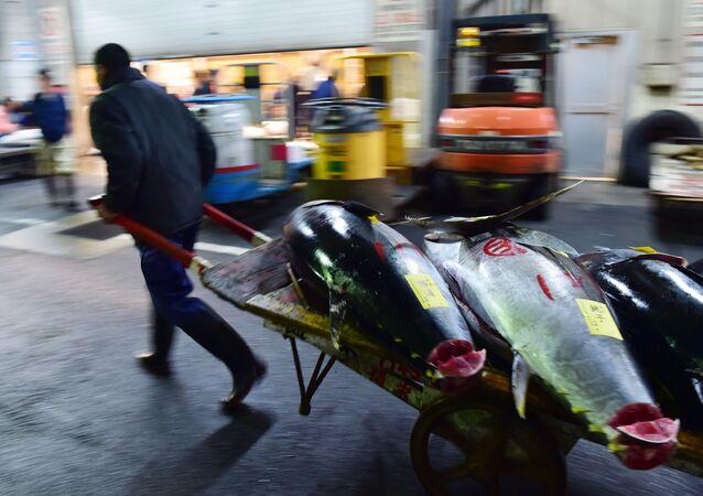 Tonni al mercato ittico Tsukiji  di Toesu vicino alla baia di Tokyo