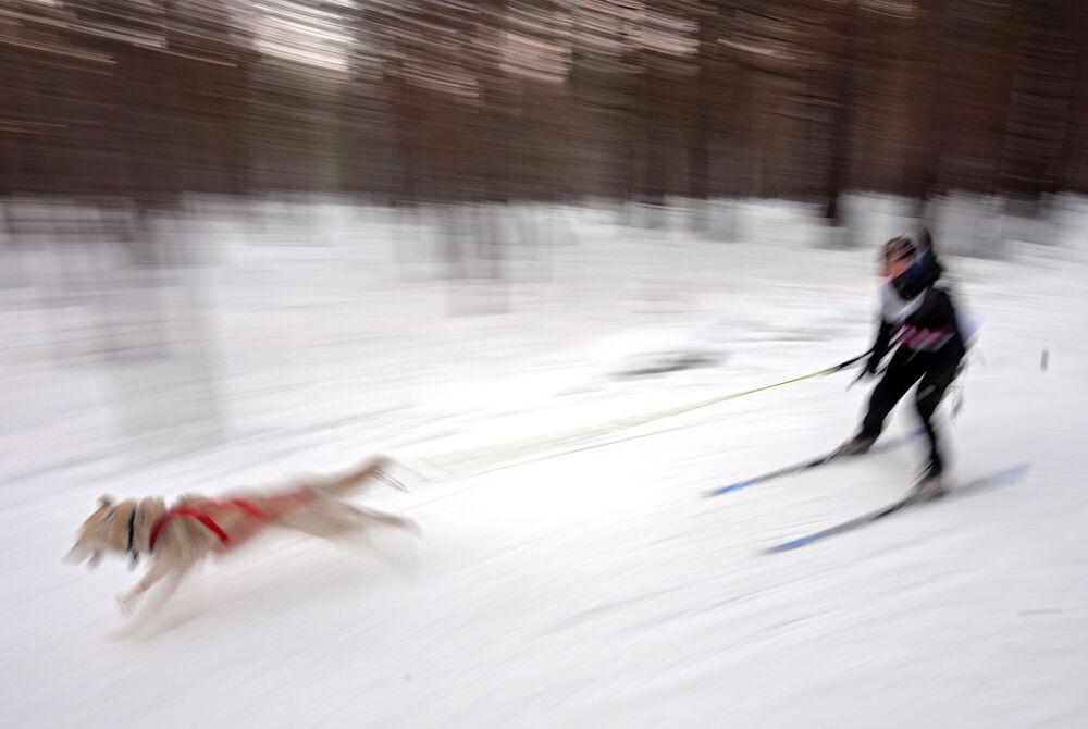 Tradizionale competizione di Capodanno Gara di pupazzi di neve 2020 nel territorio di Krasnoyarsk presso l'arena sciistica Snezhinka nella città di Sosnovoborsk