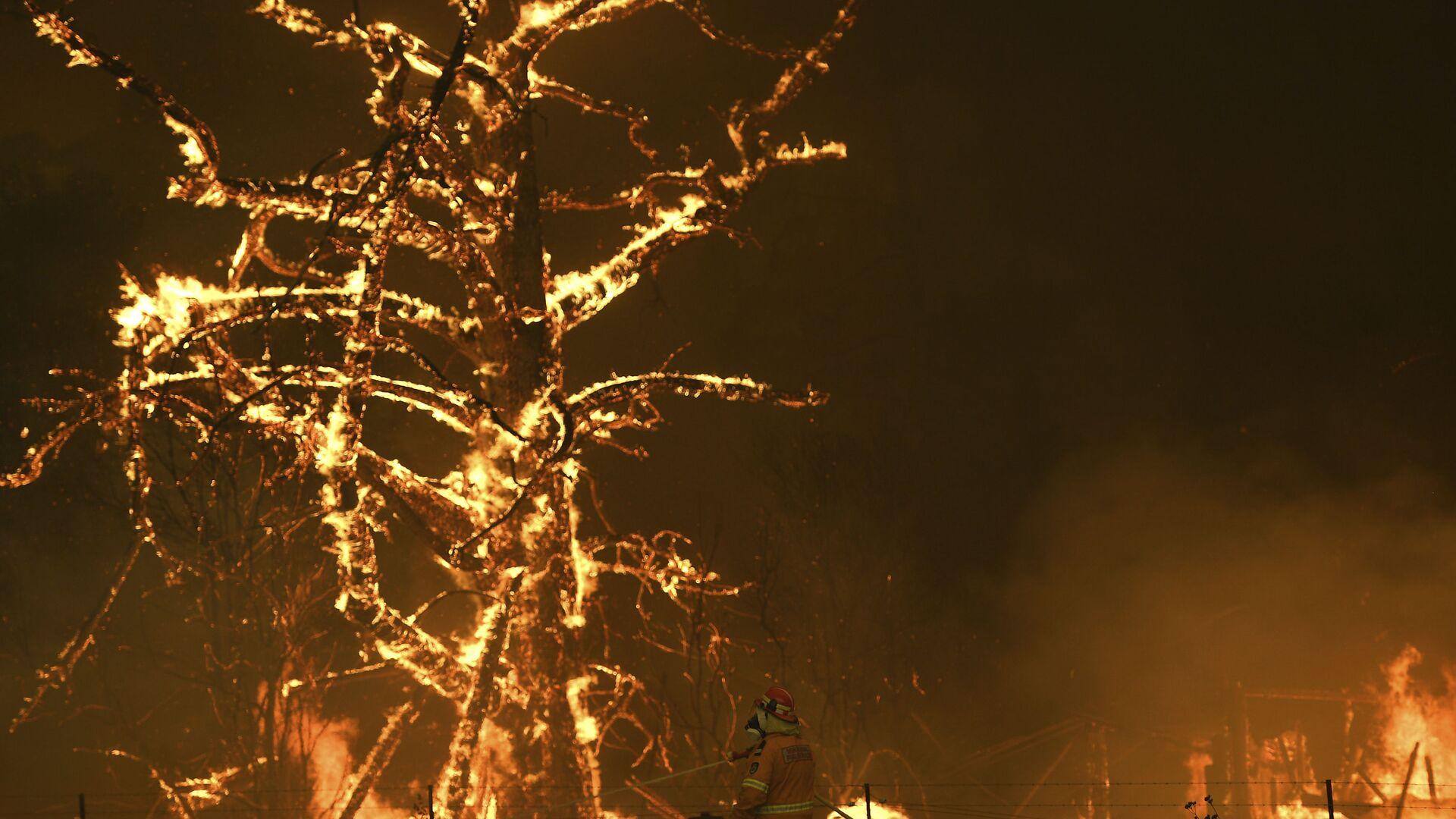 Gli incendi boschivi in Australia - Sputnik Italia, 1920, 13.08.2021