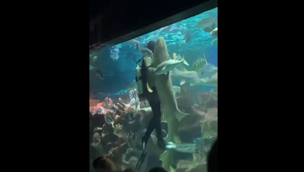 Uno squalo e un sub danzano - Sputnik Italia