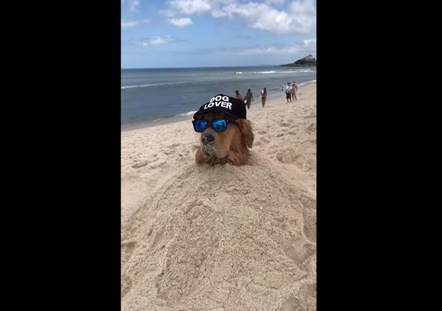 Questo golden retriever sa come godersi la sua giornata in spiaggia