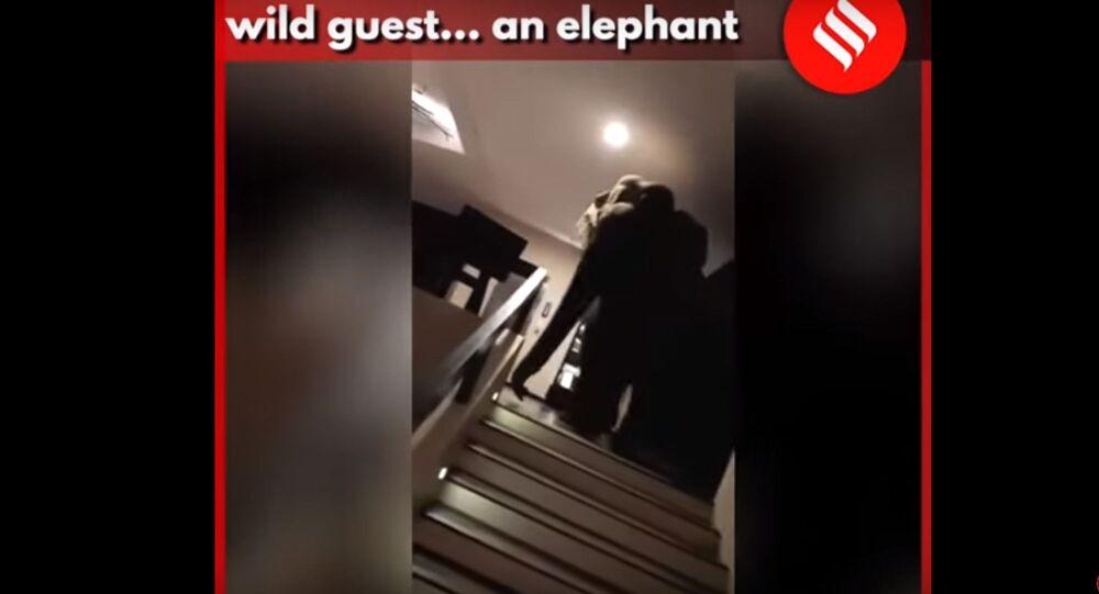 l'Elefante Natta Kota allo Jetwing Yala