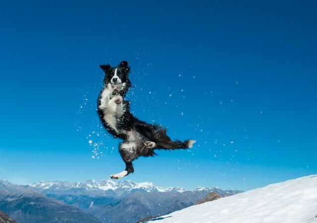 Un cane salta nella neve sulla cima di una montagna