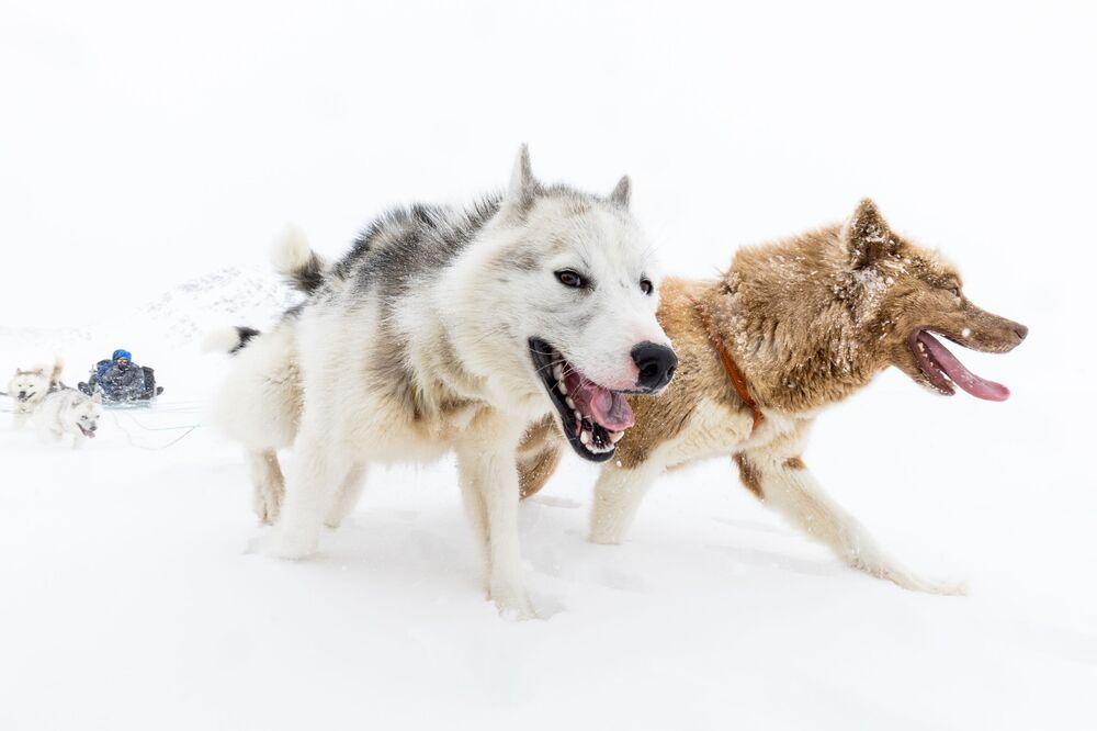 Una slitta trainata dai cani in Groenlandia