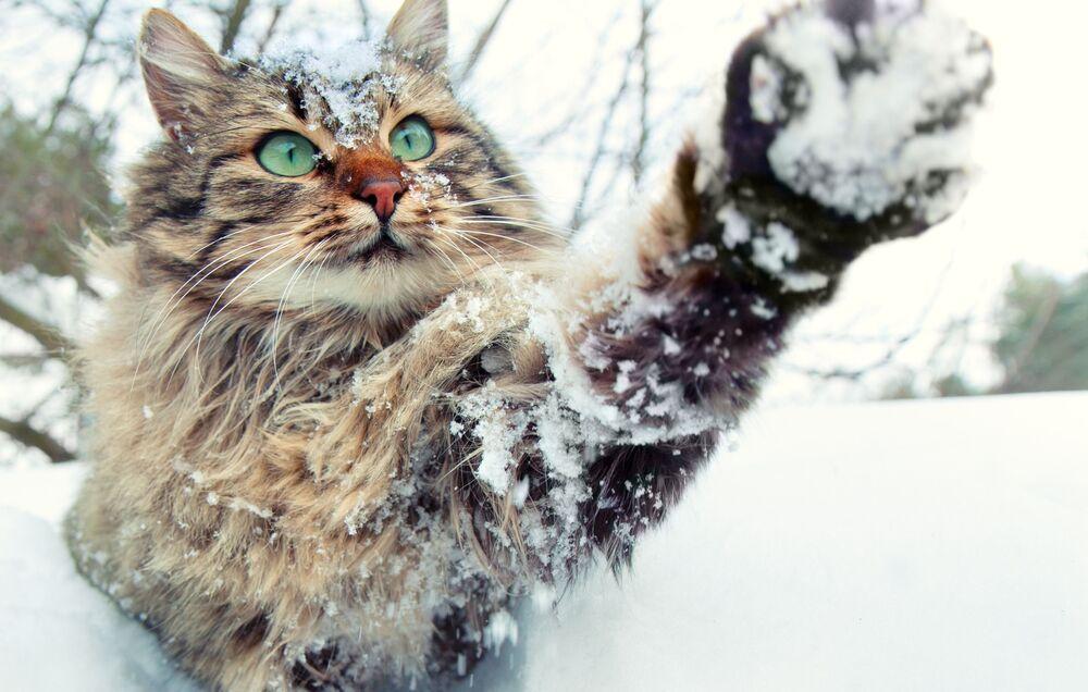 Un gatto gioca con i fiocchi di neve