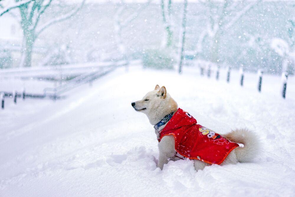 Un cane si gode il tempo nevoso