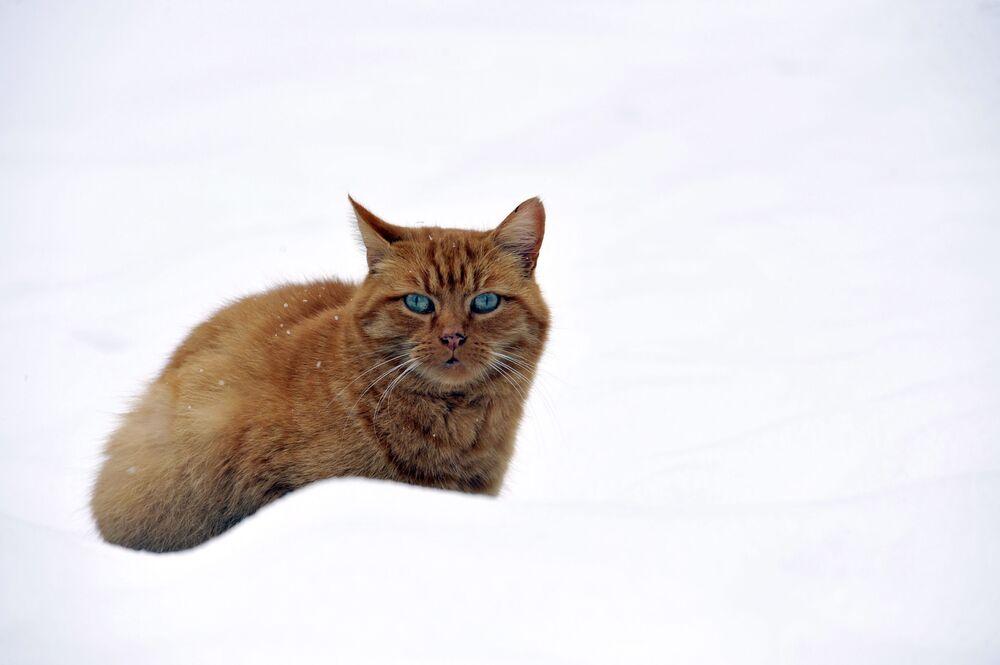 Un gatto nella neve in Francia