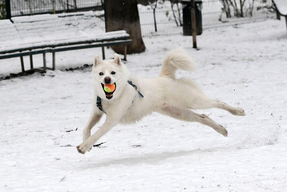 Un cane gioca con una palla a Milano, Italia