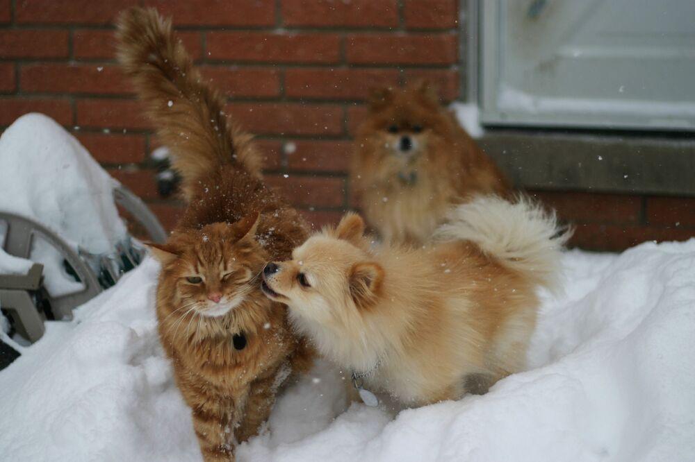 Un cane e un gatto giocano nella neve