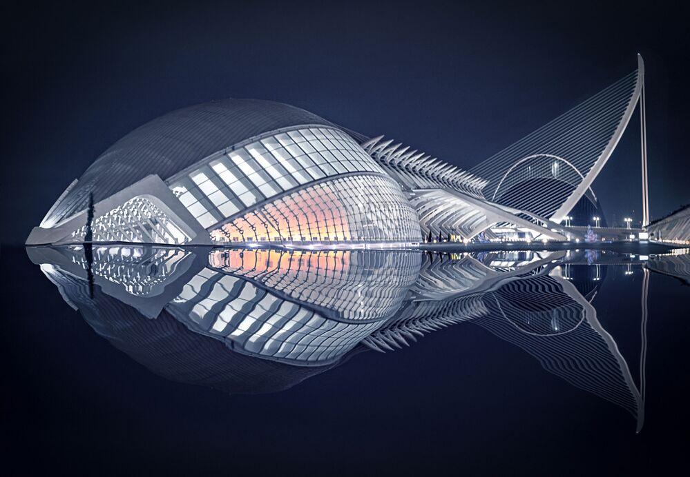 Pesce del fotografo spagnolo Pedro Luis Ajuriaguerra Saiz, vincitore di The Art of Building 2019