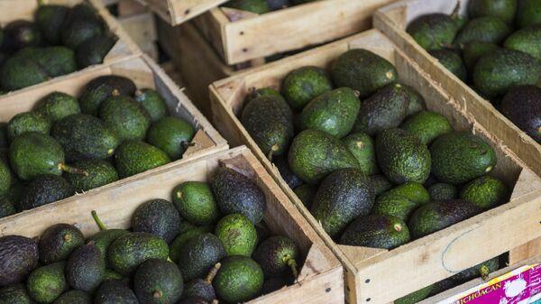 Cassette di avocado - Sputnik Italia