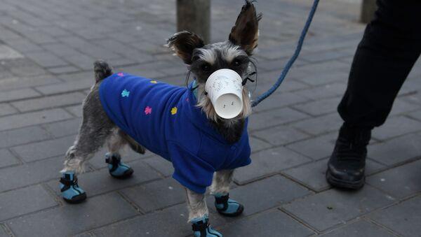 Un cane indossa un bicchierino di plastico a Pechino, Cina - Sputnik Italia