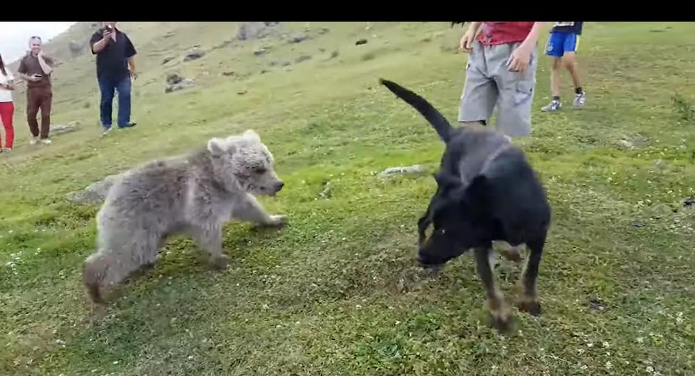 Un orsacchiotto fa amicizia con un cane - Video