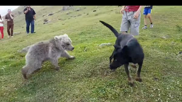 Un orsacchiotto fa amicizia con un cane - Video - Sputnik Italia