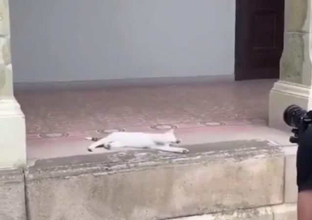 Sessione fotografica da modella di una gatta fa innamorare il web