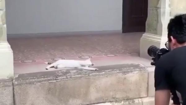 Sessione fotografica da modella di una gatta fa innamorare il web - Sputnik Italia