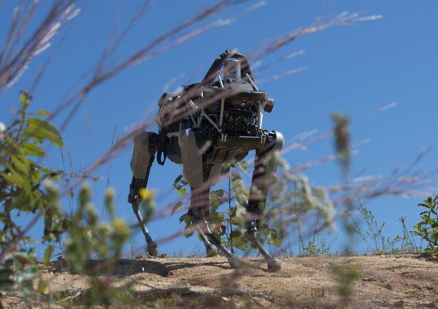 Il cane-robot Spot