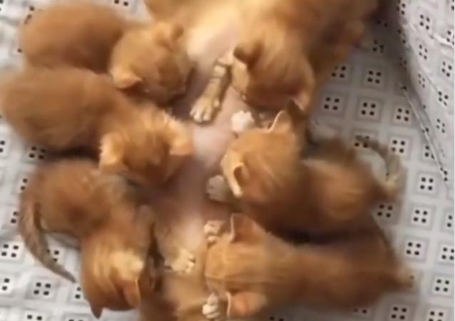Buffet a pranzo: una gatta che allatta i cuccioli commuove i social