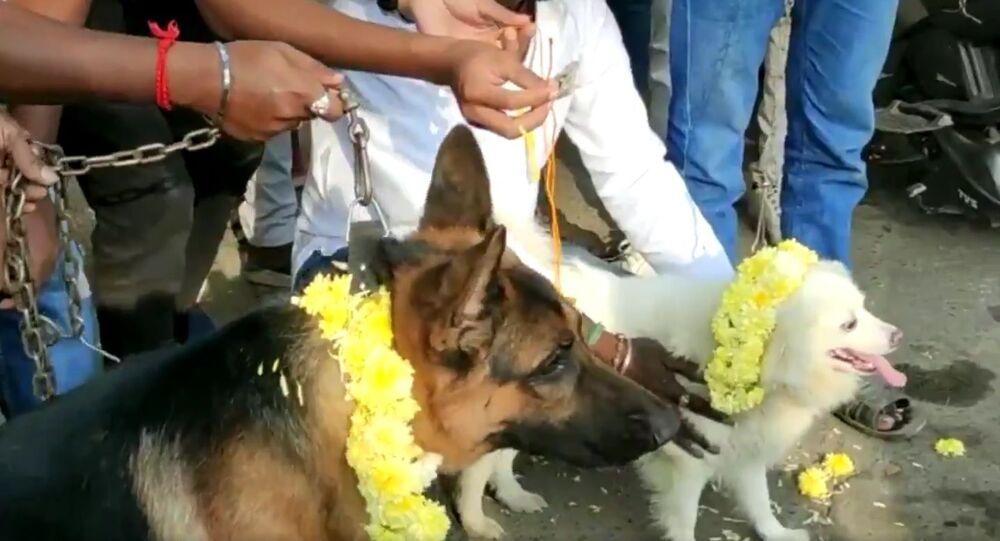 """India, giorno di San Valentino: estremisti indù fanno """"sposare i cani"""" per protesta - Video"""