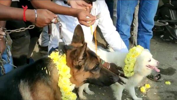 """India, giorno di San Valentino: estremisti indù fanno """"sposare i cani"""" per protesta - Video - Sputnik Italia"""