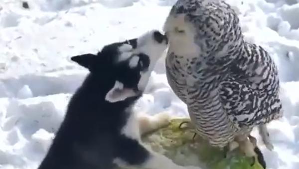Possono amarsi animali di specie diverse? - Video - Sputnik Italia