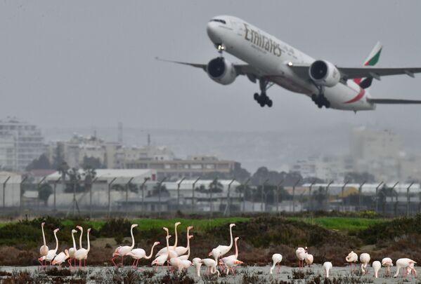 I fenicotteri rosa vicino all'aeroporto a Larnaca, Cipro - Sputnik Italia