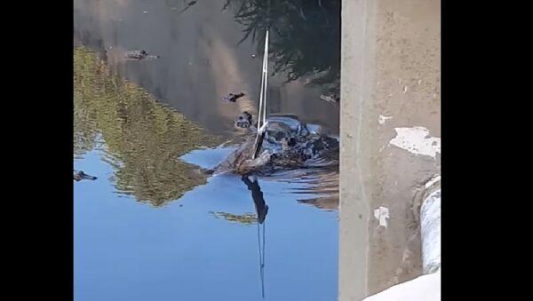 Alligatore addenta il telefono di un turista - Video - Sputnik Italia