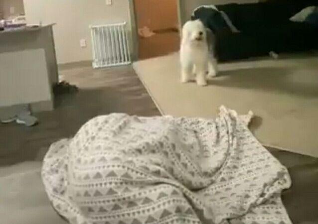 cane gioca a nascondino