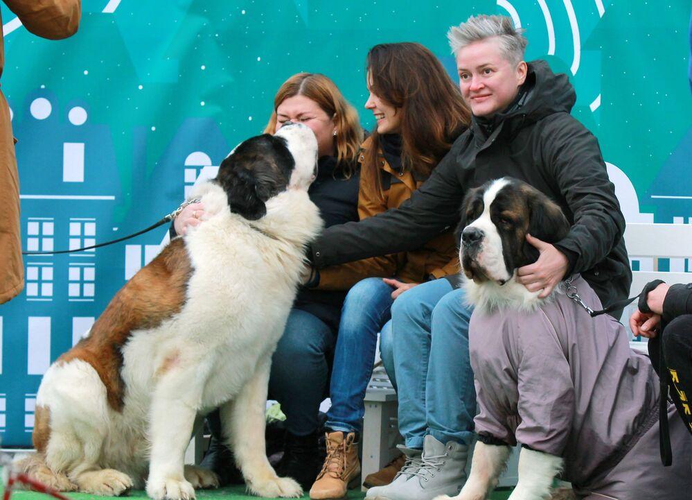 Padroni con i loro cani San Bernardo al festival Il mio cane è un supereroe a Mosca.