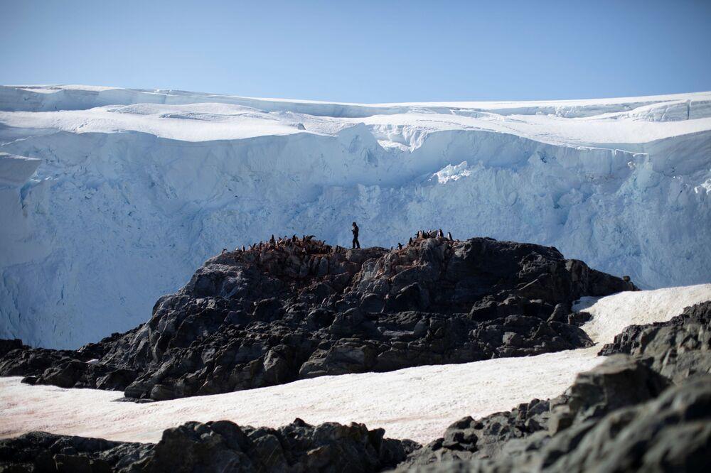Steve Forrest, scienziato, conta il numero di pinguini Papua, l'isola di Anvers, Antartide, il 4 febbraio 2020