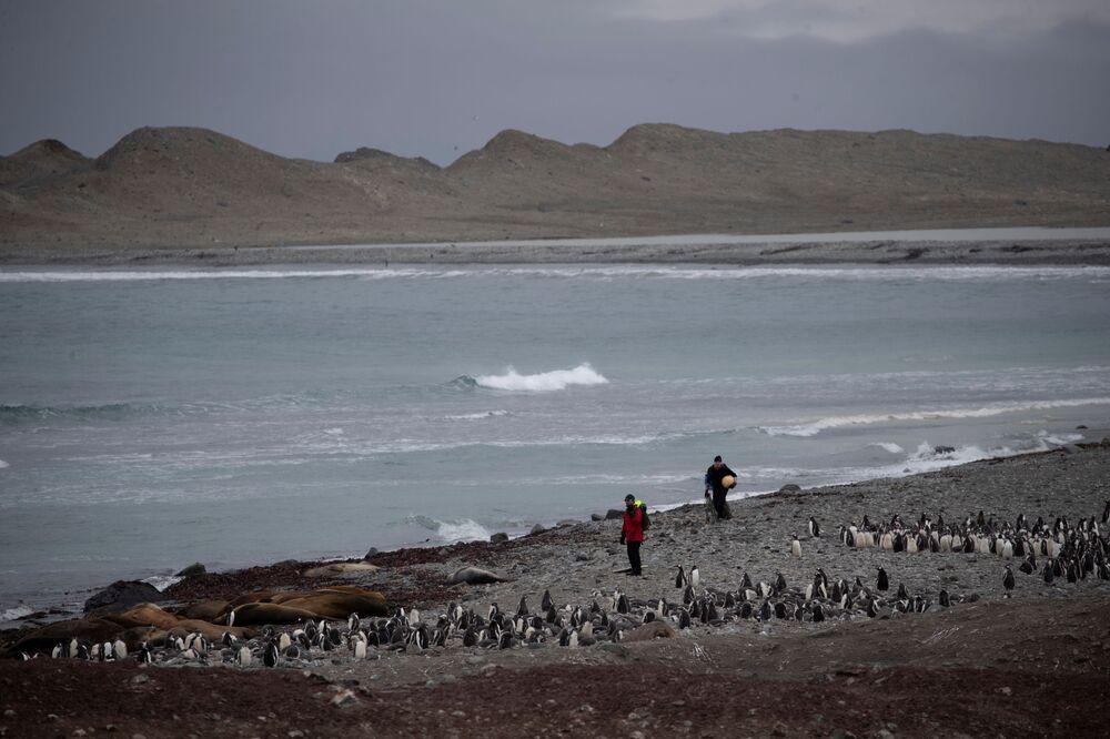Lo scienziato raccoglie della spazzatura sull'isola di Snow, Antartide