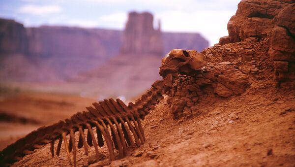 Scheletro di un animale nel deserto - Sputnik Italia